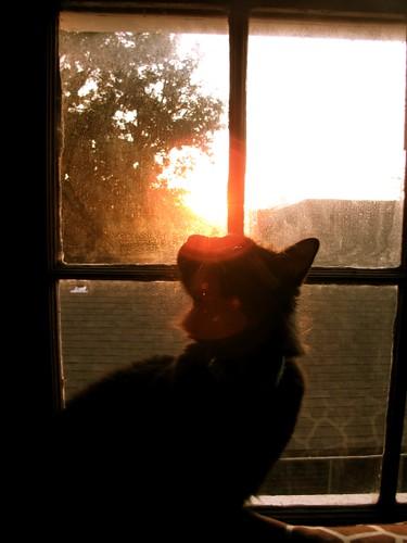 taken in my bedroom / copyright 2009