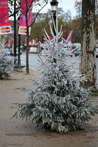 Christmas Tree in Paris, France
