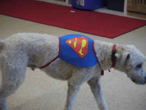 Woody, Super Dog