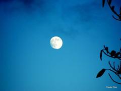 Hunter's Moon or Wolf Moon...