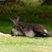 Woodland Park Zoo Seattle 047