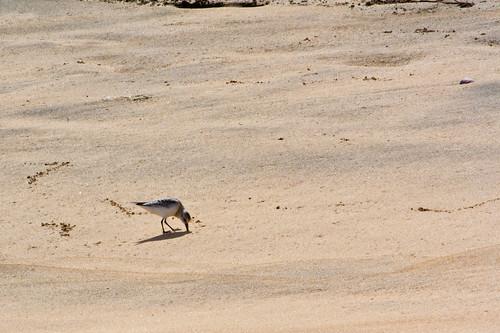 Parte de la fauna de la playa