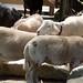 Woodland Park Zoo Seattle 036