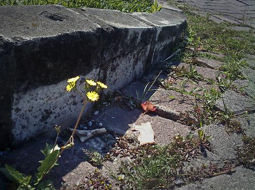 bunga_tepi_jalan