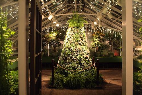 Kale Tree