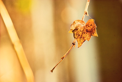 Letzte Blätter - the last foliage of autumn