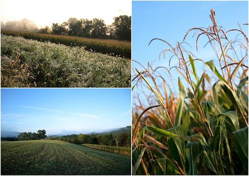Farm Triptych