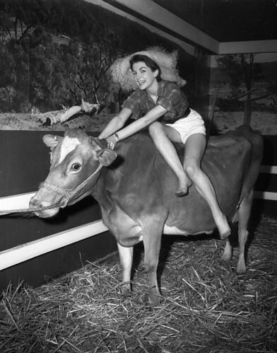 Milky Way (dairy) exhibition, Sydney Town Hall, 12 August 1955 / Ern McQuillan
