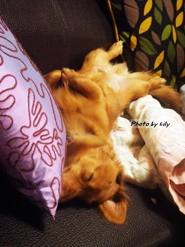 這個睡覺的姿勢也太醜了點...好奔放啊!