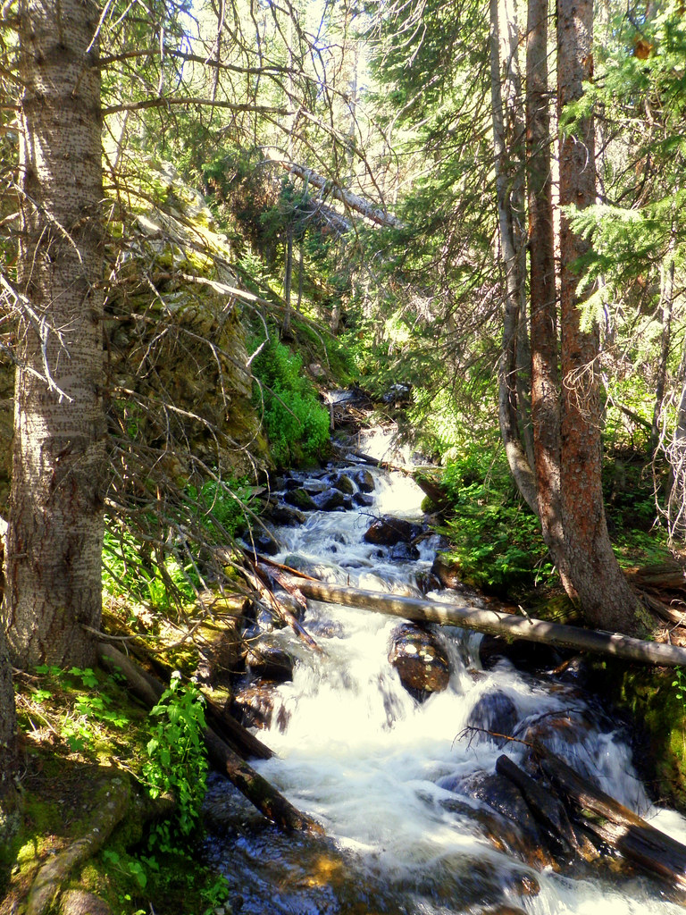 Crossing over a full stream.  Has been a wet spring/summer this year.