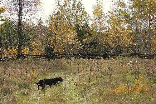 woods24