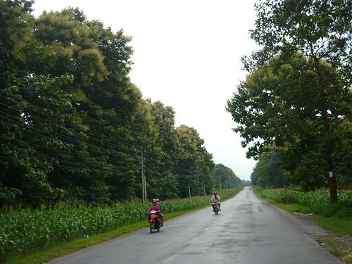 Đoạn qua Tà Lài là những vườn giá tị sum suê cây lá