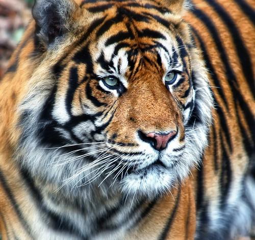 Zoo_Frankfurt_2009_03_584 Kopie
