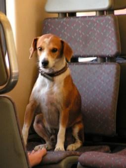 Viajando en tren en buena compañía | Bienvenido al Blog de ...