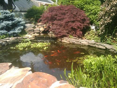 Pond at Gateway Gardens