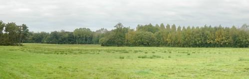 Feins Hedged Farmland