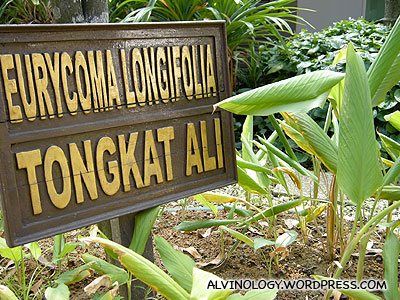 They even have Tongkat Ali - a famous local herb to treat male potency