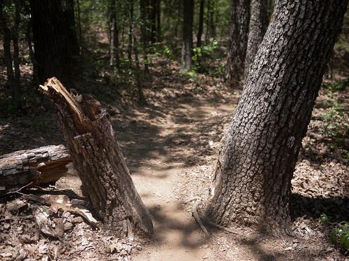 Johnson Branch tree gate (sort of)