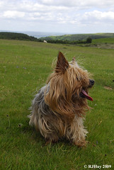 Archie Cole's Dog