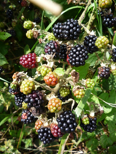 Blackberries by you.