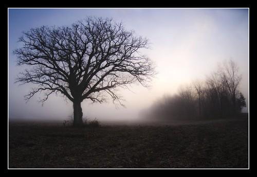 The Tree 56