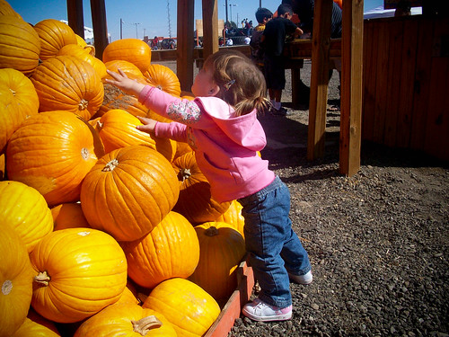 pumpkinpatch (1 of 1)-2