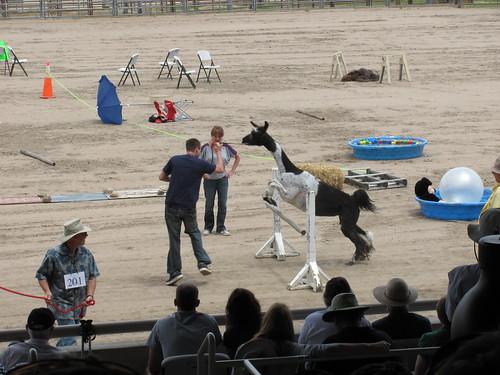llama leaping 2