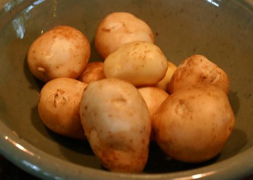 early potato harvest