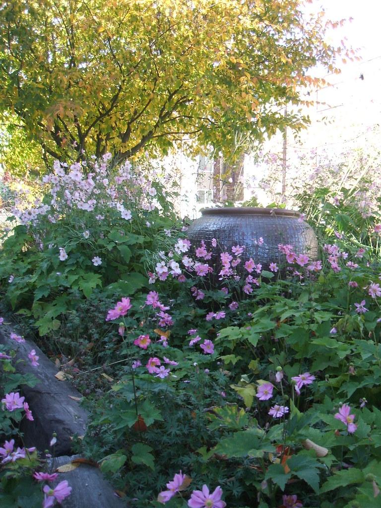 Fall foliage, windflowers and giant urn