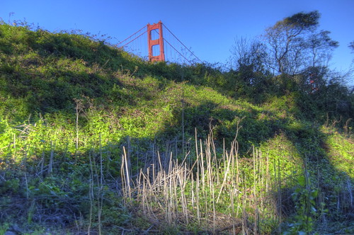 Golden Gate Foliage HDR