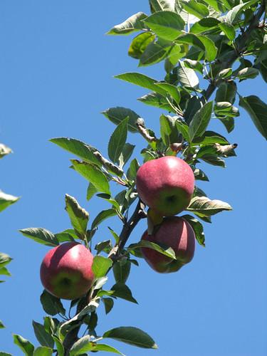 Gorgeous fruit.
