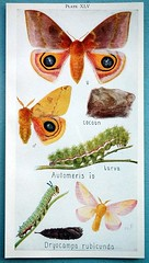 the estate of things chooses vintage moth print