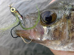 Crappie on the fly. by Goyo P