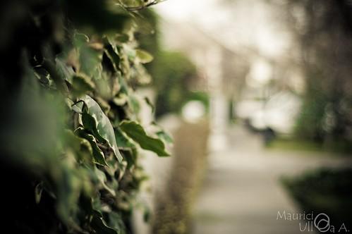 Soft Leaf Bokeh.