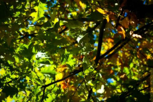 Sky hidden in the autmn tree