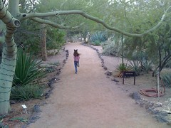 Paloma runs down Quail run, Desert Botanical G...