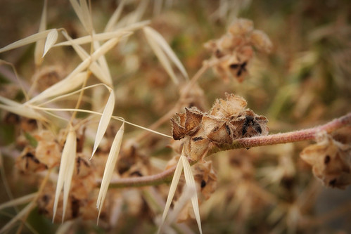 Straw-and-seed