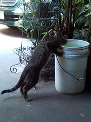 Drinking Cat [2009-1202] 001