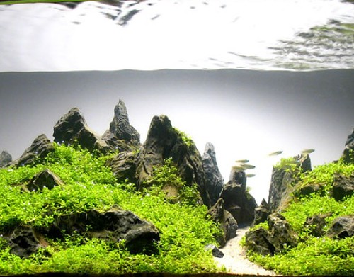 aquascaping2