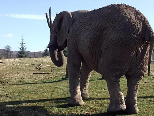 Estrella the Elephant
