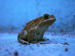 Frog?