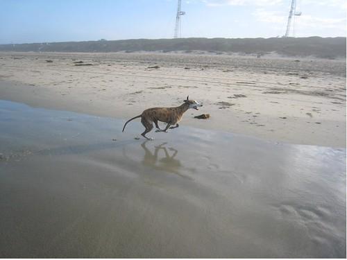 Tigger at the beach