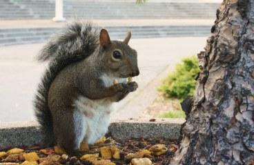 My squirrel friend from Golden Gate Park