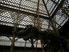 Museum of Natural History 4