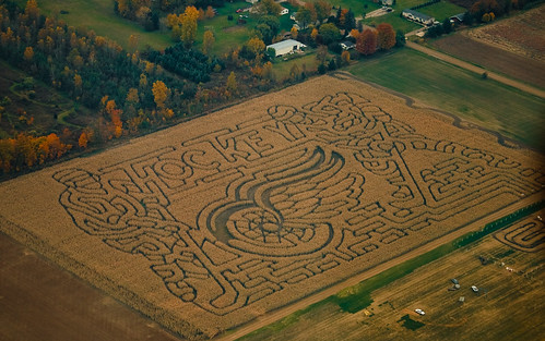 now that's a corn maze