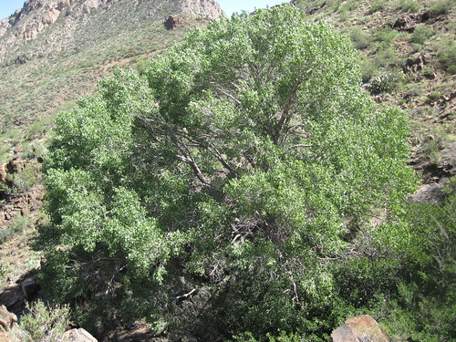Picture from West Cottonwood Spring