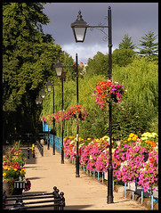 Victoria Quay in bloom