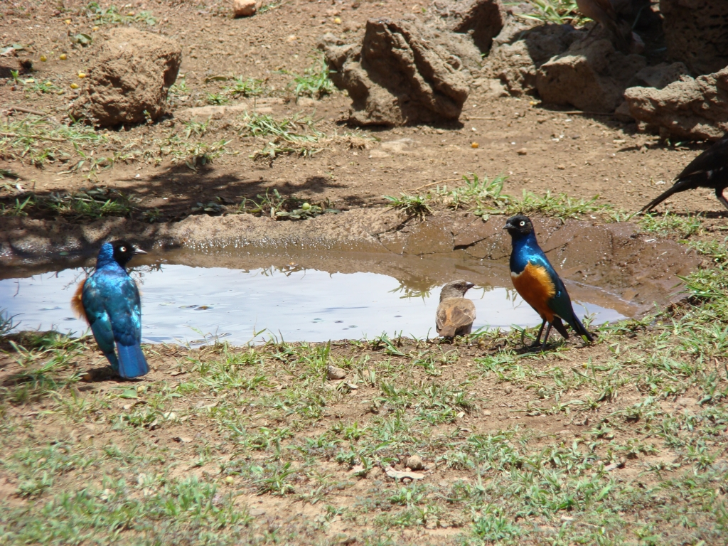 Birds and Rodents of Tsavo West