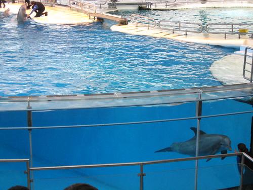 baltimore aquarium - dolphins
