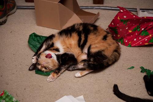 Christmas Catnip (6 of 11)